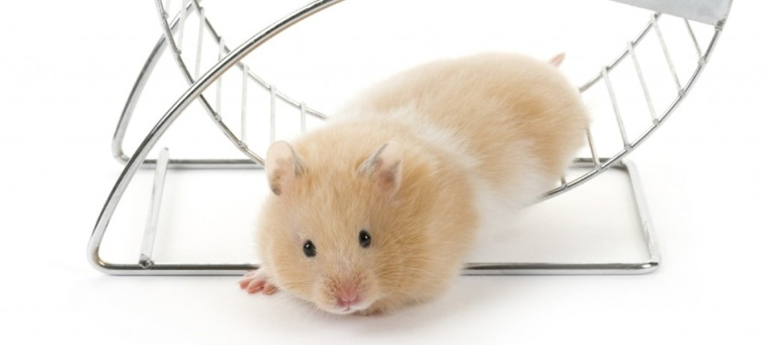 HamsterWheel-1024x461